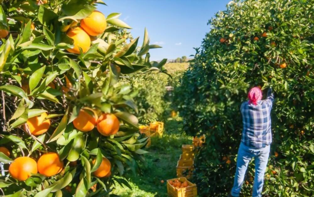 fruit picker attributes